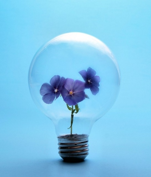 violet_light